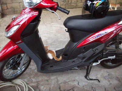 mio dan kucing