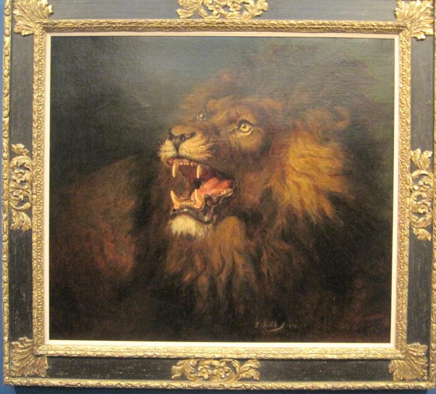singa memamerkan taringnya