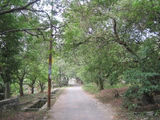 ini pemandangan yang akan menyambut anda begitu memasuki kebun belimbing di Margonda