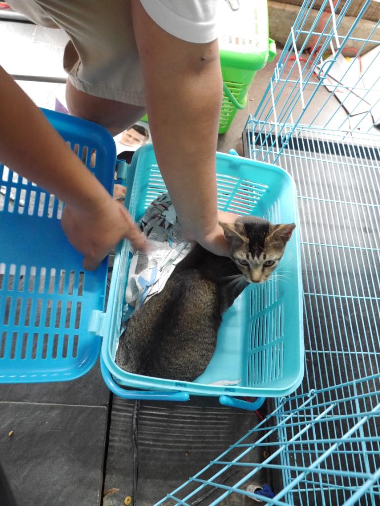 Persiapan Steril Kucing Atau Anjing Kisah Pedagang Lepas