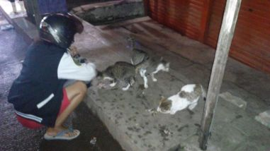 menggantikan memberi makan kucing di Stasiun Depok Baru