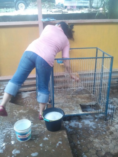 membersihkan kandang di Animal Defenders