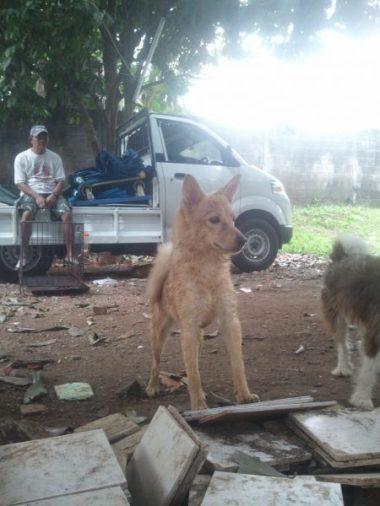 Si Chibby anjing yang ditinggal di KHD kami bawa jalan-jalan ke Animal Defenders