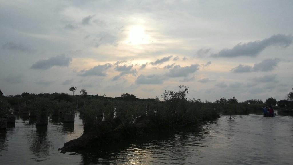 Hutan Mangrove Pekalongan