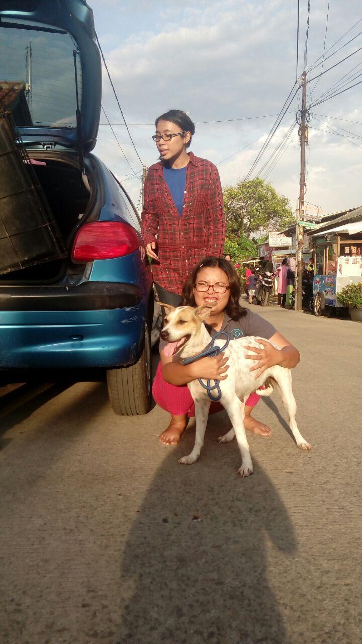 anjing UI : Dolly