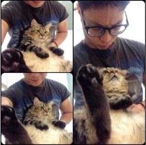 kucing-dikta